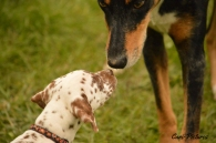 éducateur-canin-photo-berger-dobermann-dalmatien.jpg
