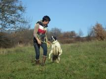 travail-autocontrole-chien-refuge-pas-saute-gestion-excitation-tire-en-laisse-methode-positive.jpg