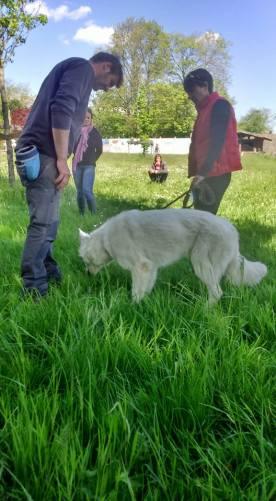 apprentissage-cavage-recherche-truffe-berger-blanc-suisse.jpg