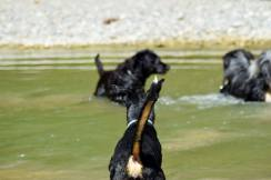 baignade-ballade-collective-canine