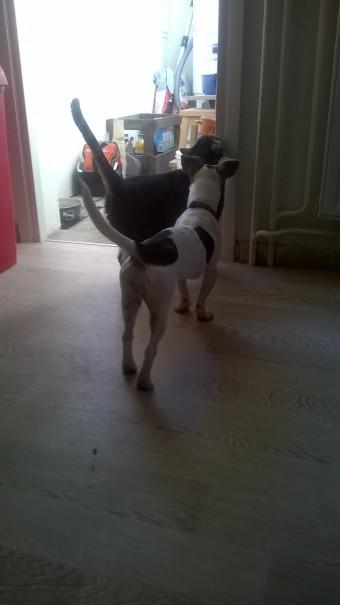 familiarisation-socialisation-chien-chat